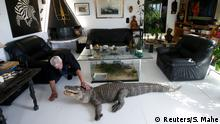 Philippe Gillet, 67 year-old Frenchman who lives with more than 400 reptiles and tamed alligators, gives chicken to his alligator Ali in his living room in Coueron near Nantes, France September 19, 2018. Picture taken September 19, 2018. REUTERS/Stephane Mahe