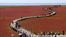 China Red Beach in Panjin