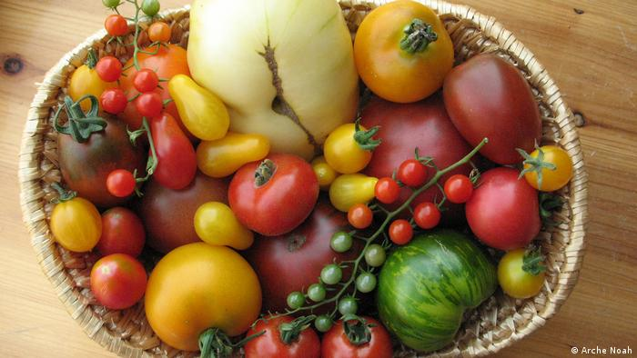 DW eco@africa - Different varieties of tomatoes in a bowl