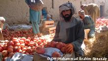 Granatapfel Ernte in Zharai-Distrikt, Kandahar-Provinz, Afghanistan.