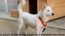 Südkorea Pungsan Hunde Geschenk von Kim Jong Un