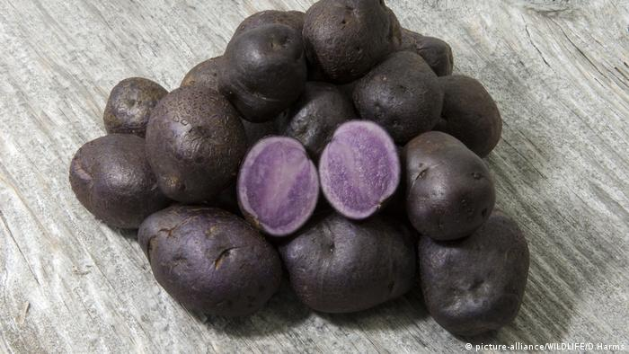 Purple potatoes (picture-alliance/WILDLIFE/D.Harms)