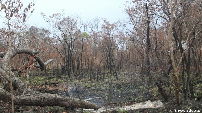 Floresta queimada na província de Sofala, Moçambique