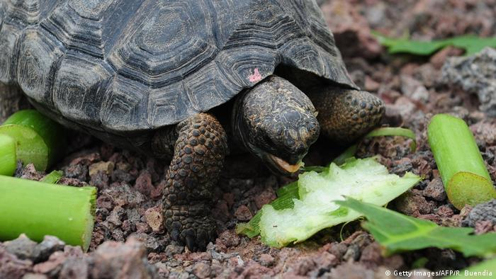 bilder von schildkröten  malvorlagen gratis