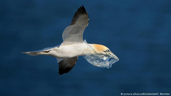 Seevögel mit Plastikmüll