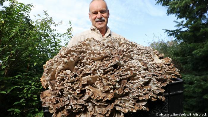 Робби Крассельт (Robby Krasselt) и гигантский гриб