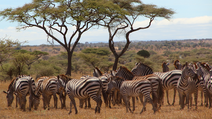 DW Global Ideas Lernpaket #2 Wald 5 (Serengeti, Tansania)