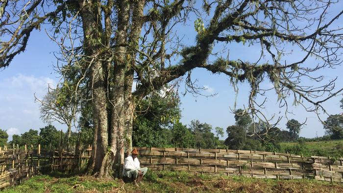 DW Global Ideas Lernpaket #2 Wald 1 (Heiliger Baum, Äthiopien)