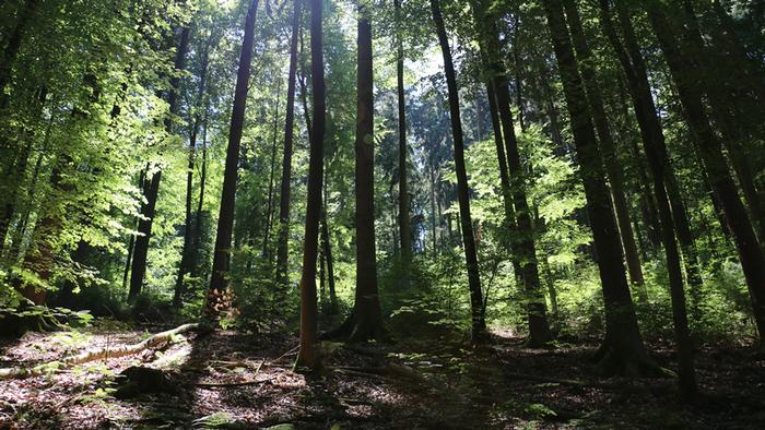 DW Global Ideas Lernpaket #2 Wald 7 (Laubwald, Deutschland)