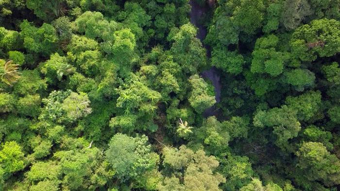 DW Global Ideas Lernpaket #2 Wald 2 (Intakter Regenwald, Sumatra)