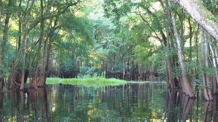 DW Global Ideas Lernpaket #2 Wald 14 (Sumpfwald, Kongo)