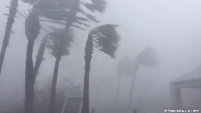 Trees blow in strong winds during Hurricane Michael (Reuters/WeatherNation)
