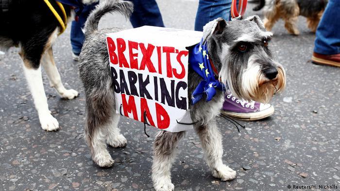 Hunde gegen Brexit (Reuters/H. Nicholls)