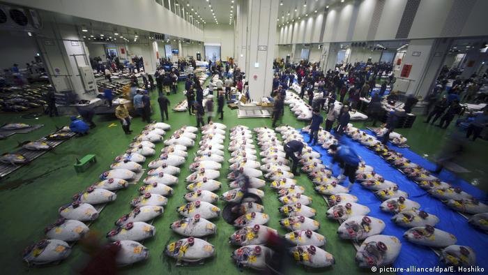 Tržnica Toyosu i novogodišnja aukcija, tune izložene na podu (picture-alliance/dpa/E. Hoshiko)