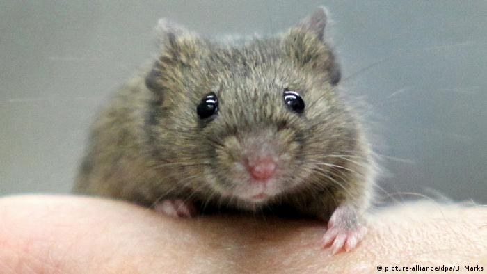 A mouse on a human hand (picture-alliance/dpa/B. Marks)