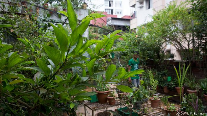 Bangladesh Dhaka Dachgarten