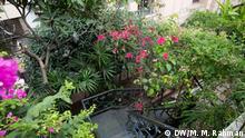 Rooftop garden of Dr. Ferdous Ara Chowdhowdhury. Dhaka, Bangladesh