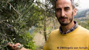 Καλλιεργώντας ελαιόδεντρα με τον παραδοσιακό τρόπο στην Ιταλία