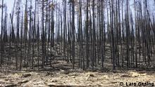 A forest after a fire near Kremmling, Colorado