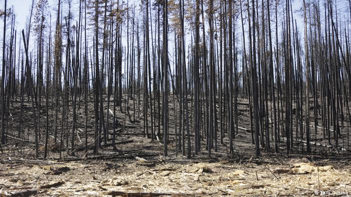 Winners and losers of the American wildfire pandemic