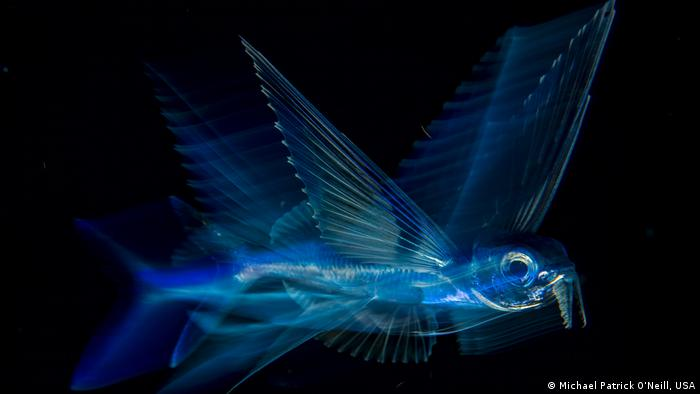 A flying fish at night