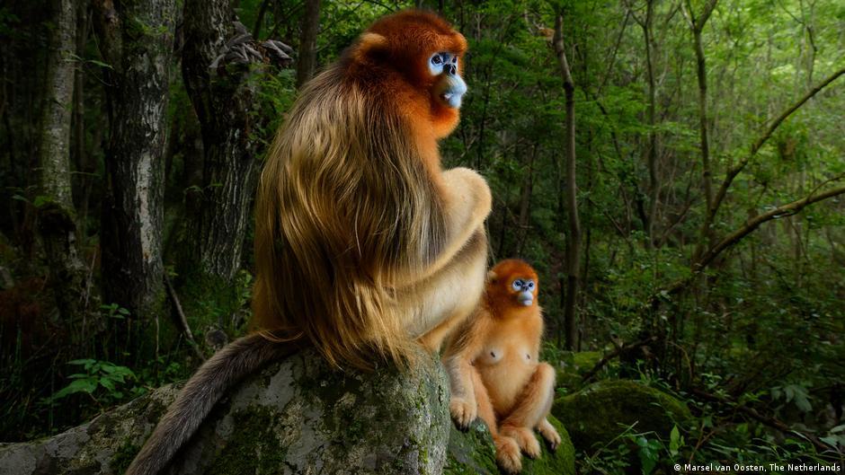 أفضل صور للحياة البرية لعام 2018 جميع المحتويات Dw 20 10 2018