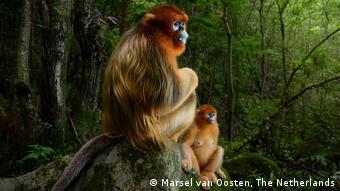 2018 Wildlife Photographer of the Year | Marsel van Oosten, Niederlande (Marsel van Oosten, The Netherlands)