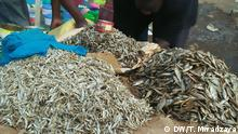 Kenia dried fish - Dagaa - from Lake Victoria