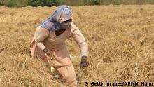 Indien - Landwirtschaft in Amritsar