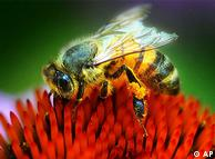 Las abejas necesitan flores para alimentarse y polinizarlas.