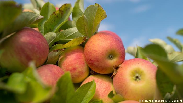 Яблоки в Германии