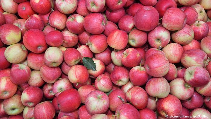 Apples (picture-alliance/dpa/P. Pleul)