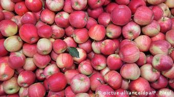 Η Ένωση Ιταλών Αγροτών στηρίζει τη στροφή στην παραδοσιακή και οργανική γεωργία
