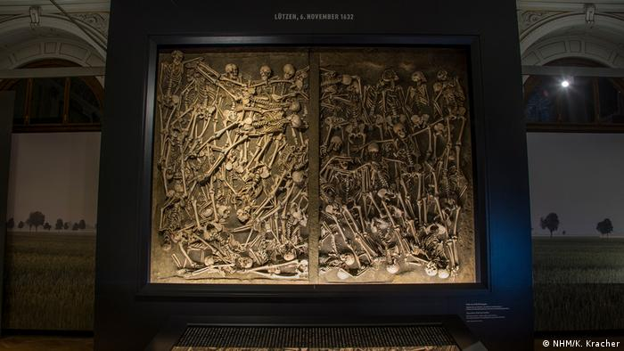 Bones from a mass grave on display (NHM/K. Kracher)