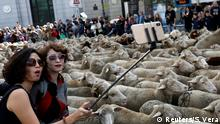 Women take a selfie next to a flock of sheep during the annual sheep parade through Madrid, Spain, October 21, 2018. Shepherds parade the sheep through the city every year in order to exercise their right to use traditional routes to migrate their livestock from northern Spain to winter grazing pasture land in southern Spain. REUTERS/Susana Vera TPX IMAGES OF THE DAY