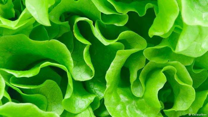 Коварная зелень - бактерии на салате