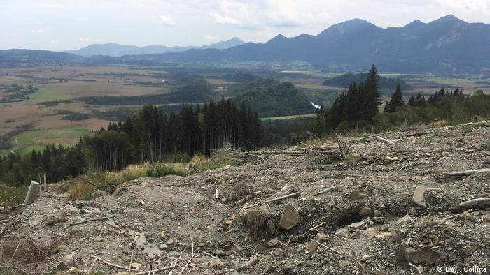 Eine kahle Stelle mit entwurzelten Bäumen an einem sonst bewaldeten Berghang (DW/J. Collins)