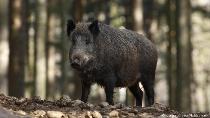 Важат строги правила за отстрелването на дивите животни