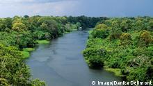 Brasilien Tropischer Regenwald