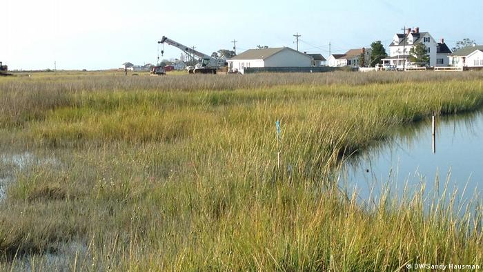 Marsh grass soaked with water, white houses in the background