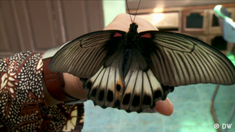 A giant moth held by an entomologist