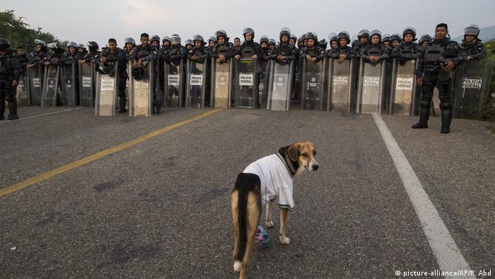 Mittelamerika Flüchtlings-Caravan Richtung USA (picture-alliance/AP/R. Abd)