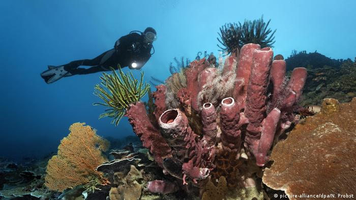 A diver behind a coral
