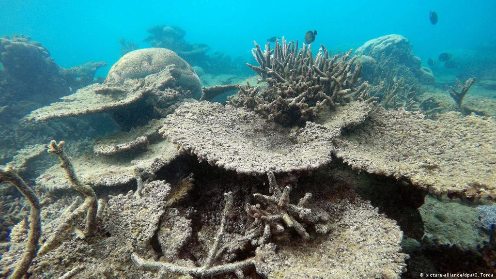 Life and Death in a Coral Sea
