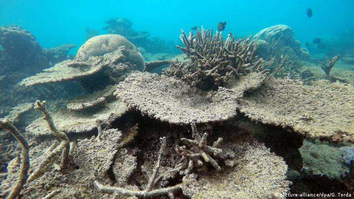 Great Barrier Reef Last Chance Tourists Flock To World
