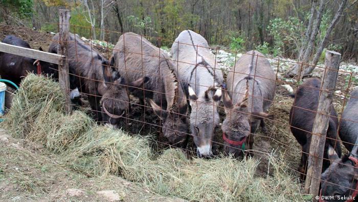 Bosnien-Herzegowina Eselsmilch aus Vlasenica (DW/M. Sekulic)