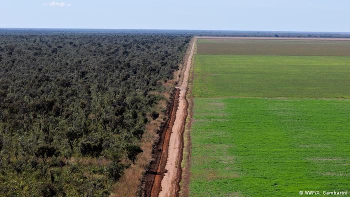 Estrada de terra divide a soja do cerrado ainda preservado no Piauí