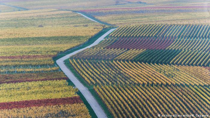 Germany Wine Route in Autumn(picture-alliance/dpa/W. Cezanne)