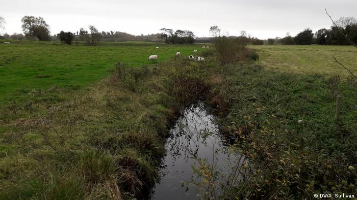 Sheep graze along a stream in the countryside at the Irish-Northern Irish border