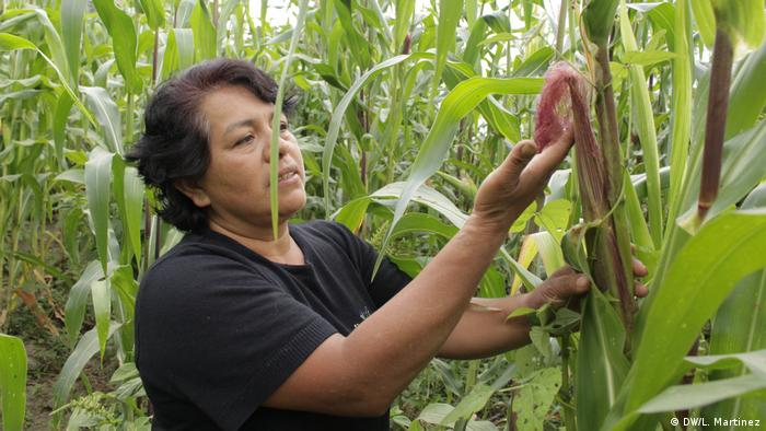 Dona Maura Aparicio Torres tends to a plant on her farm